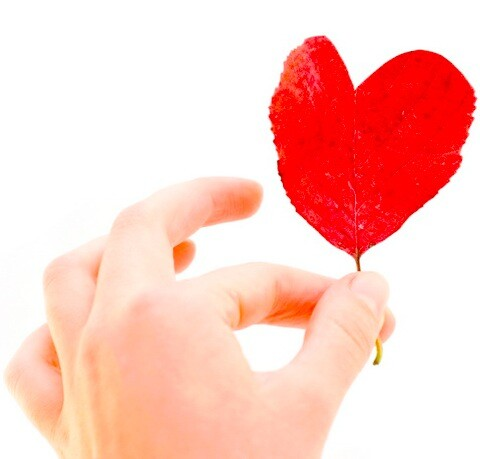 person holding a love leaf