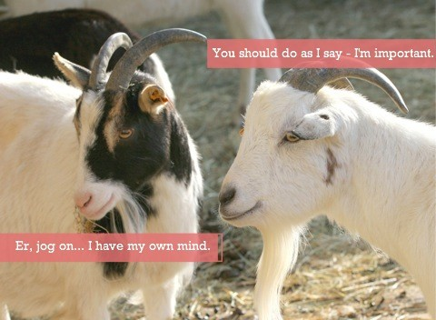 One goat trying to tell the other what to do
